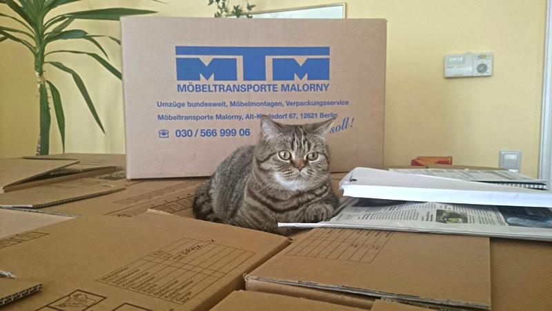 MTM-Model: Timon